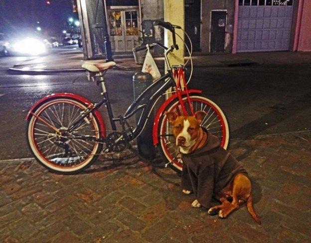 furto roubo bicicleta